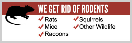 home-rodents